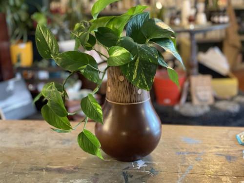 Pothos Wooden Pot