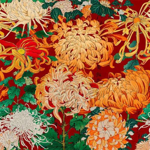 Mind the Gap Chrysanthemums