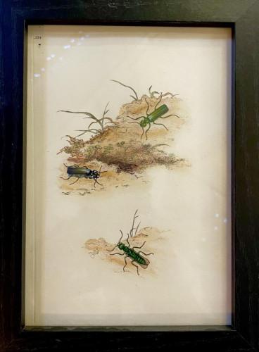 The Weird and Wonderful Framed 1800's Print