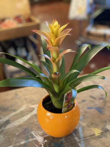 Bromelia Orange Glove Pot