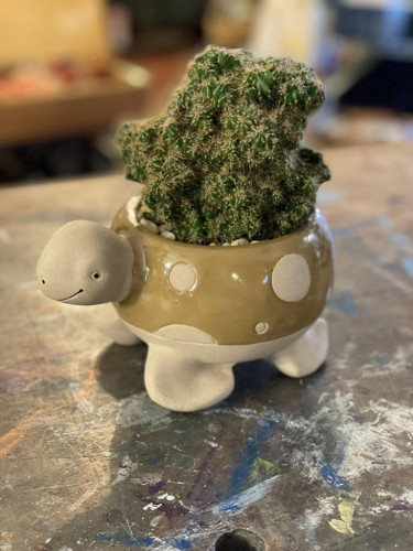 Clumping Cactus Turtle Planter