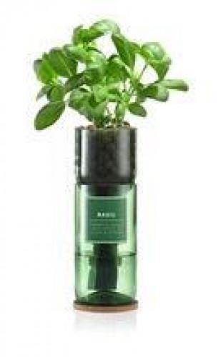 Hydro-Herb Kit Basil