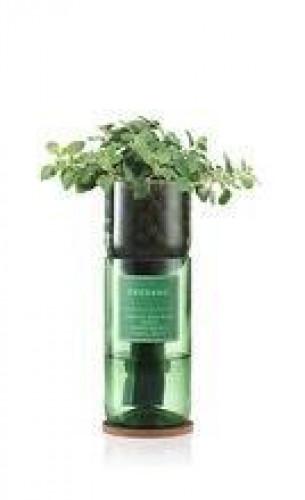 Hydro-Herb Kit Oregano
