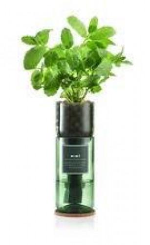 Hydro-Herb Kit Mint