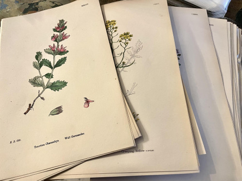 Loose Print Plates From Books  Circa 1800