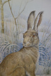 An English/British Hare seated in a landscape