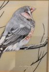 English 20th century study of a Finch Bird