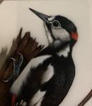 English gouache study of a Woodpecker