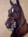 1930's portrait of a Horses head