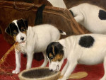 19th century English Jack Russell puppies playing with a mans vanity case