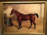 Chesnut in a stable