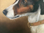 Portrait of  a Jack Russell dog