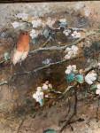 An English Robin on an Apple Blossom tree