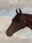 Portrait of a Hunter horse in a landscape