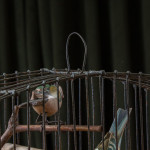 An unusual small wirework birdcage with four carved and painted wooden birds