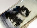 ANTIQUE CONTINENTAL SILVER & ENAMEL CIGARETTE CASE HOLDER c. 1910 Kitten / Cat