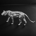 Large silver tiger