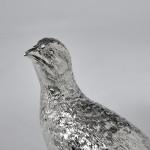 Silver partridge cock