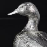 Large silver mallard drake