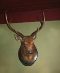 Vintage Taxidermy, Stag Head