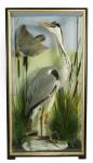Heron and Woodpecker Taxidermy.