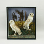 Owls In A Glass Case