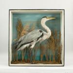 Heron In Glazed Case