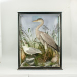 Taxidermy Heron and Gull