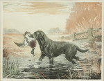 Hunting Dogs, Labrador and Setter