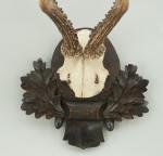 Roebuck Antlers on Black Forrest Carved Shields