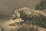 Startled, Tiger Etching, Herbert Dicksee