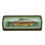 Malloch Brown Trout Trophy Fish Model