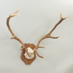 Pair of Red Deer Antlers, Skull Mount, Scotland, Cluny Castle 1989