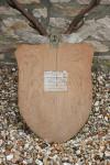 Antique Taxidermy Stags Head, John Macpherson & Son
