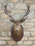 Vintage Taxidermy, Stags Head